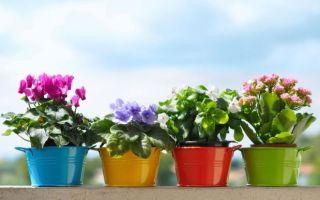Живые талисманы: значение комнатных растений по фен-шуй, секреты выбора и использования