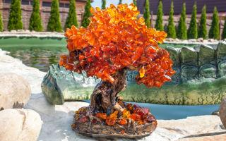 Подарок природы в доме — дерево счастья, куда поставить по фен-шуй