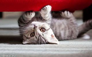 Благотворное влияние домашних животных на ваш дом — описание, правила выбора и размещения по фен-шуй