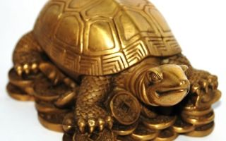 Мощный денежный талисман: черепахи в фен-шуй, описание и правила расположения